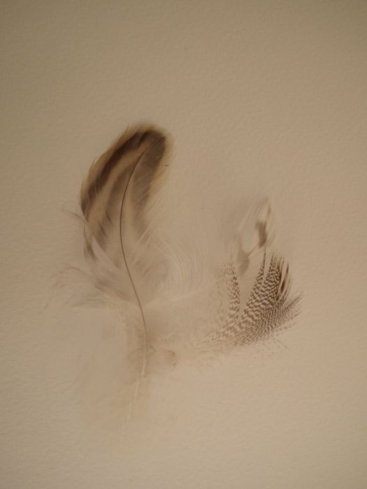 feather_2